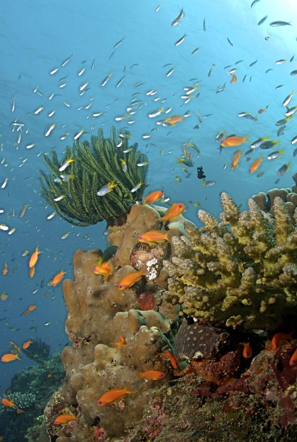 A colorful coral reef, surrounded by fish