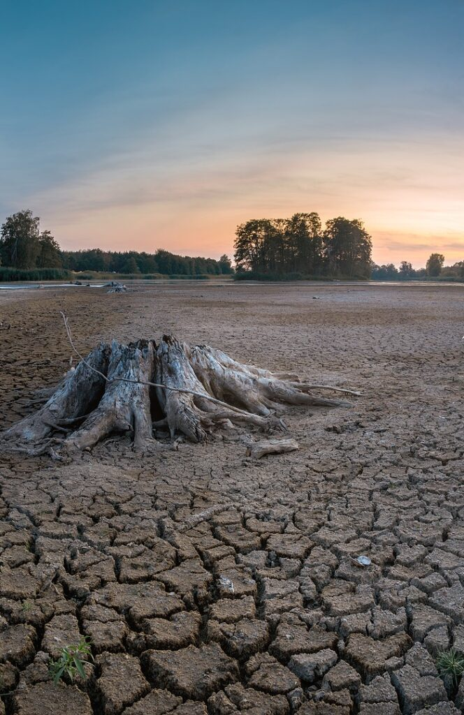 A dry desert, with severely cracked ground surrounding a dry tree stump