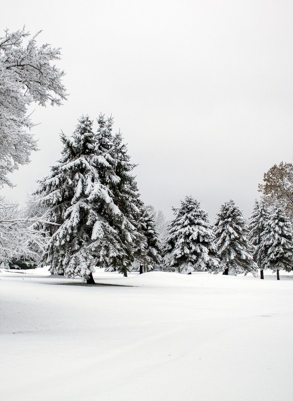 A snow covered hill with snowy pine trees