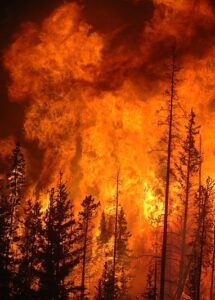 A vicious forest fire rages on