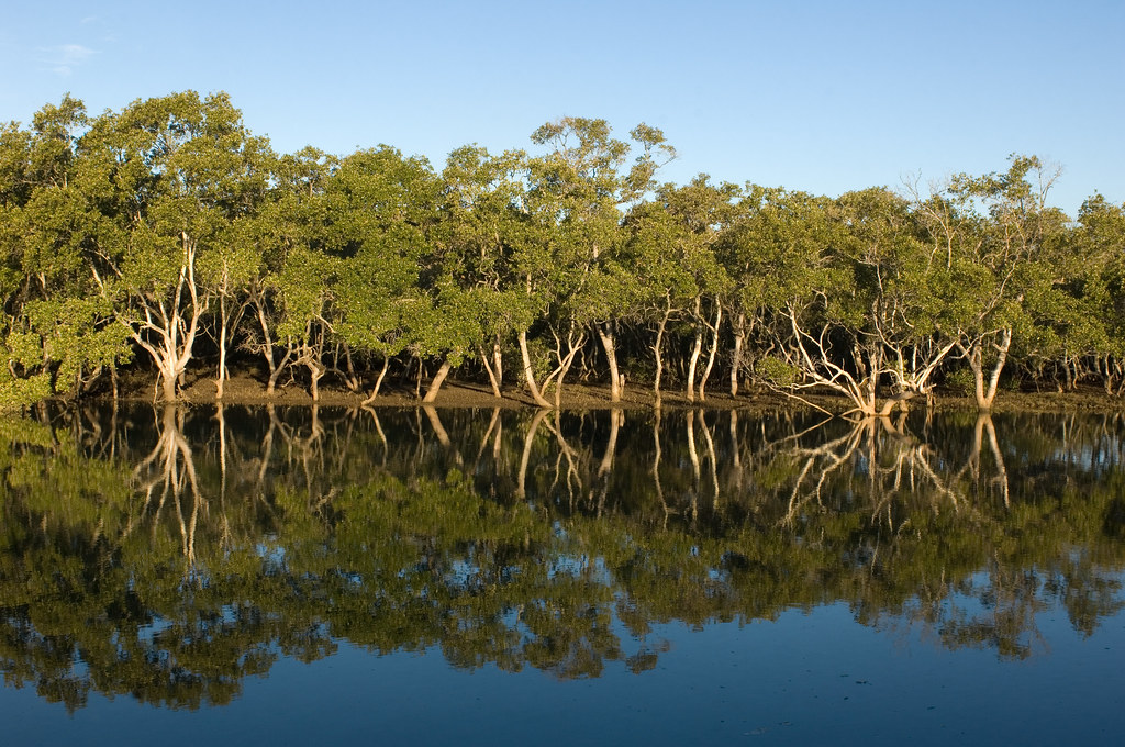Mangrove trees line the water of a canal