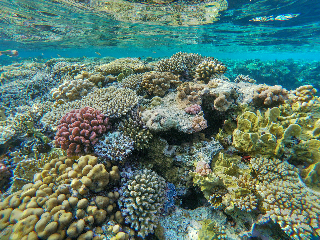 A coral reef with some bleached corals