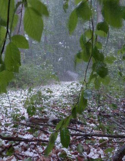 A hailstorm coats a forest view.