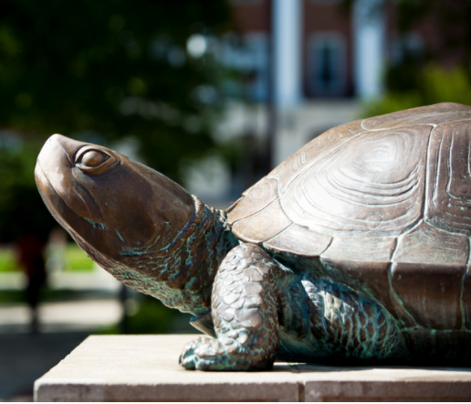 The Terrapin statue in front of McKeldin Library points its nose to the sunlight