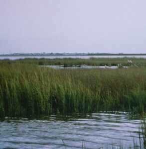 A scene of coastal wetlands