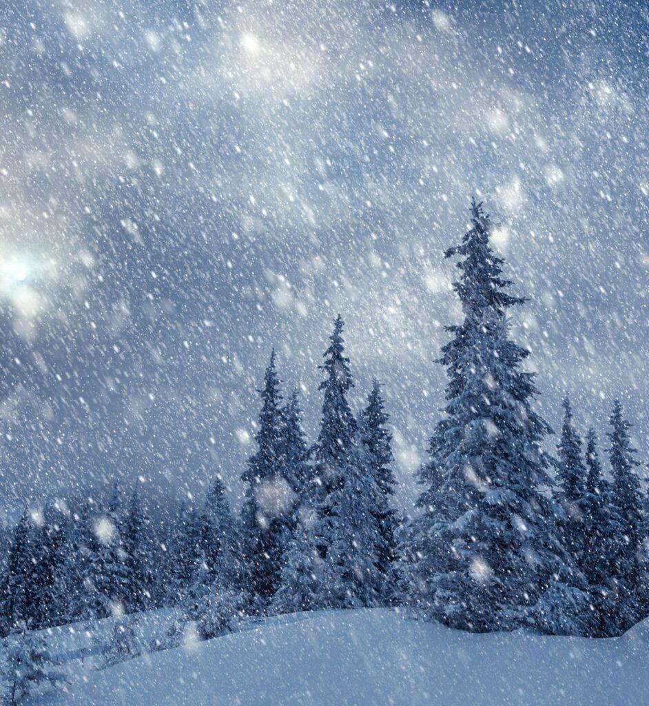 Snow falling around some pine trees