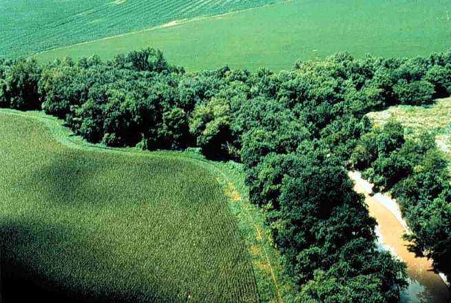 A well-preserved natural riparian strip on a tributary to Lake Erie