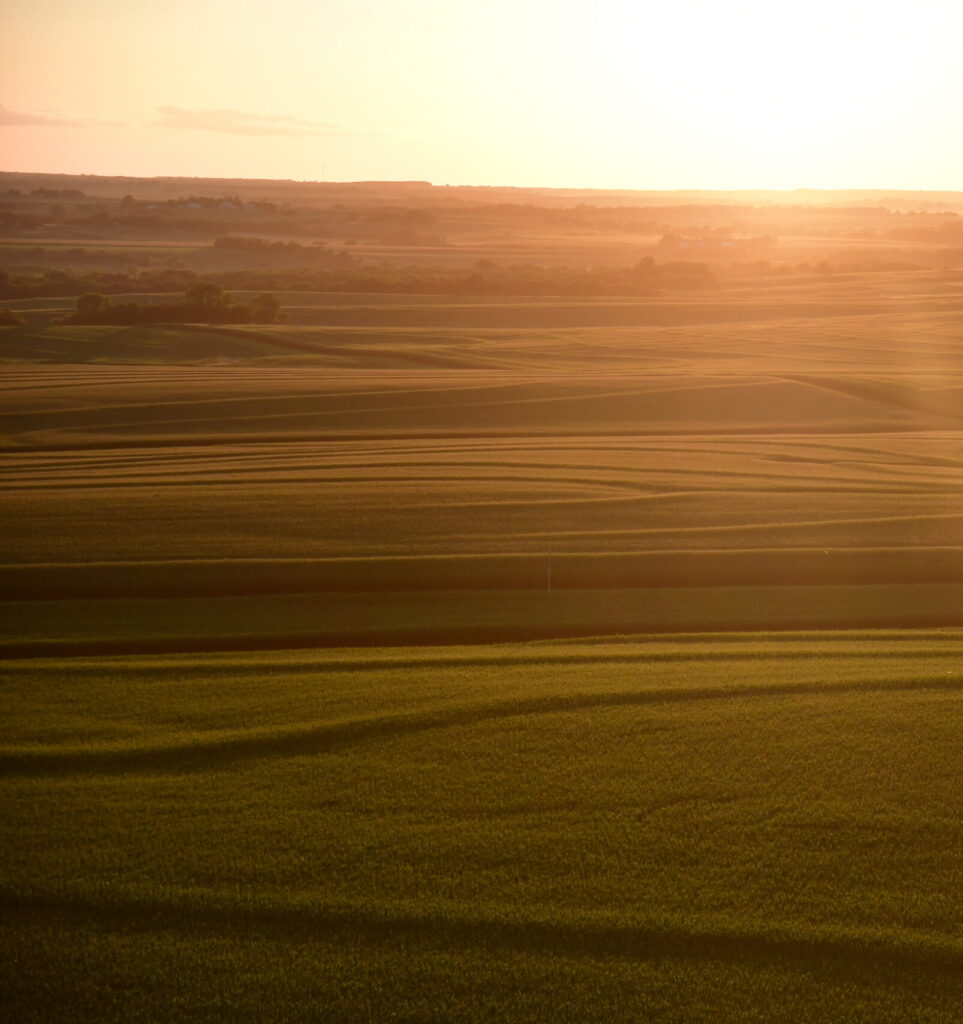 A sun peaks over the horizon of a flat, grassy field