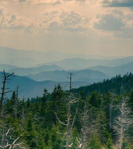 Acid Rain Scenes from Great Smoky Mountains National Park - Clingmans Dome