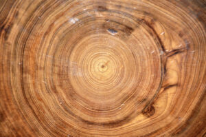 A close up of tree rings, which are the lightest brown on the inside and get progressively darker moving outward