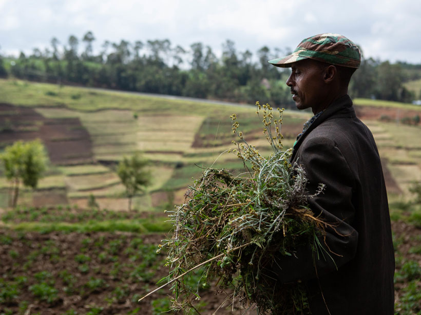 A farmer carries forage for his mule in southwestern Ethiopia. Farther north in the country, starvation spread this year in the face of civil war. Credit: Jacquelyn Turner, International Research Institute for Climate and Society