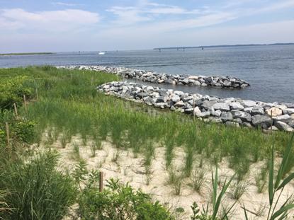 A living shoreline